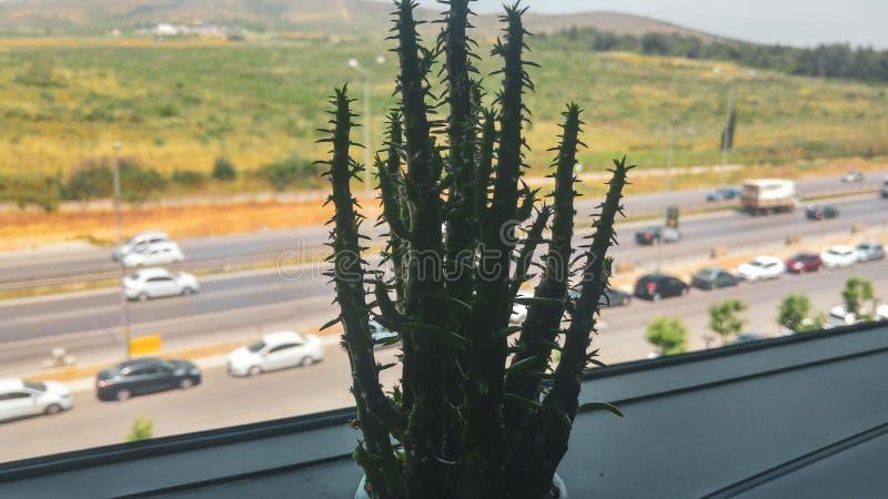 Cactusbloem in het bureau royalty-vrije stock foto