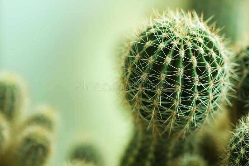 Cactusclose-up stock foto