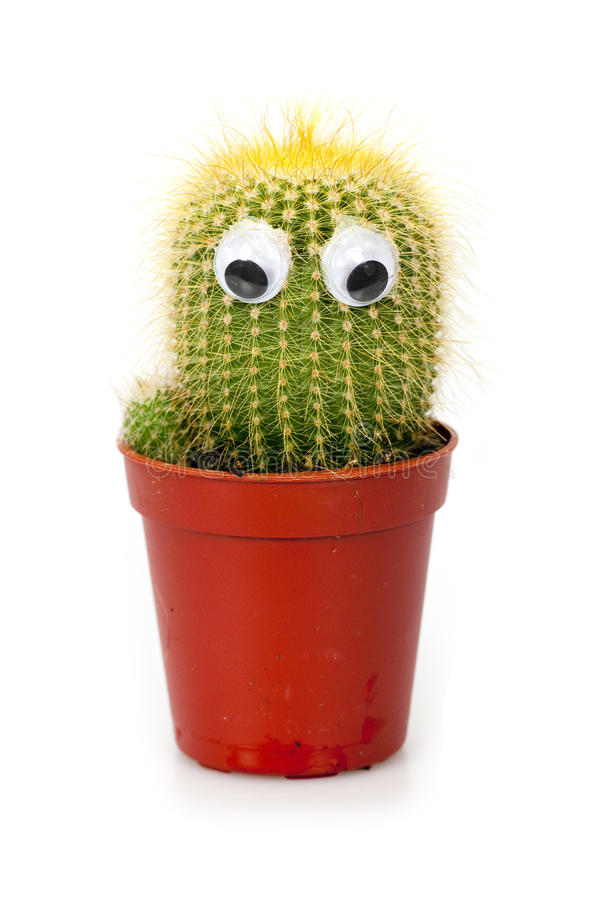 Cactuse in flowerpot royalty free stock photography