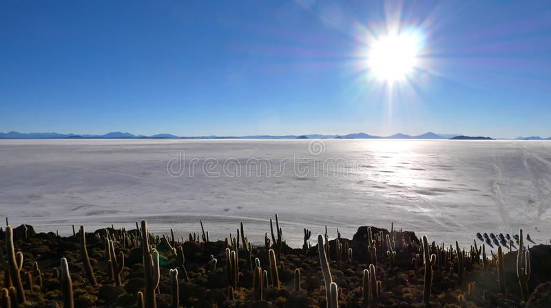 Cactuseiland, Salar de Uyuni, Altiplano, Bolivië stock afbeeldingen