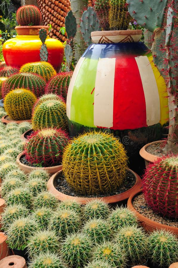 Download Cactuses stock photo. Image of detail, botany, cactus - 14695388