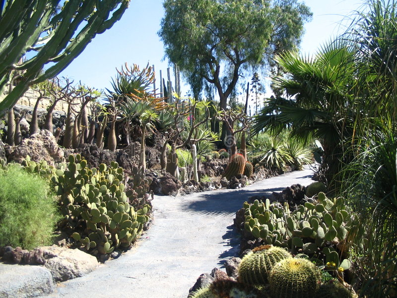Cactuses. In Jungle Park, Tenerife royalty free stock photos