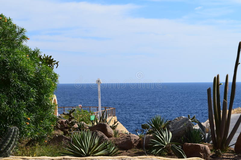 Cactuses on a background of the sea royalty free stock image