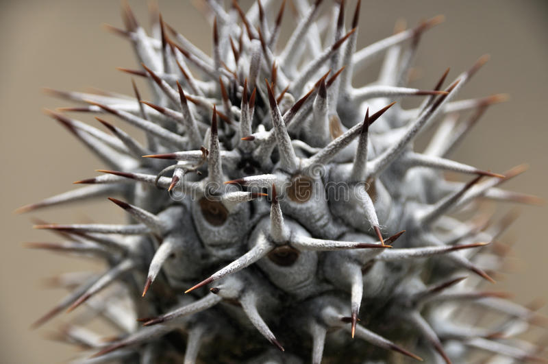 Cactuses royalty free stock photography
