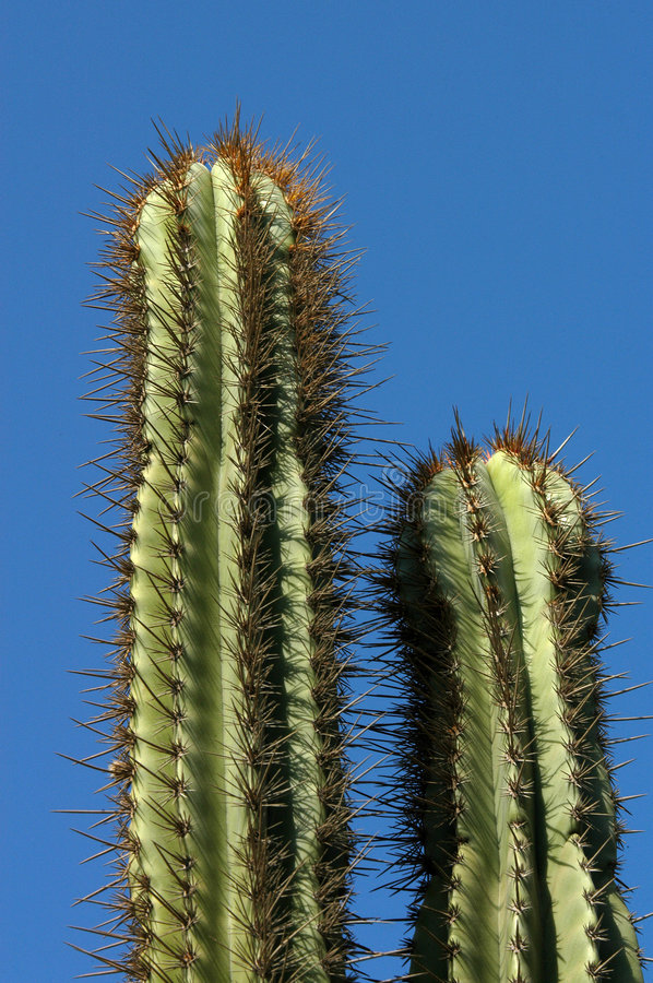 Free Cactuses - Mexico Royalty Free Stock Photography - 2227677