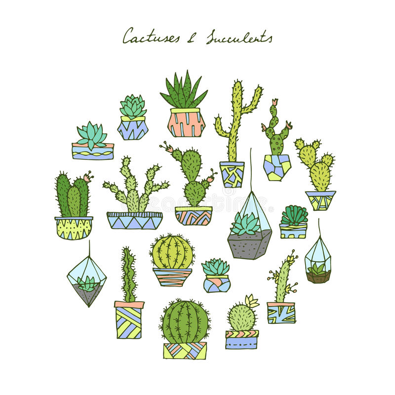 Cactuses, succulents set. royalty free illustration