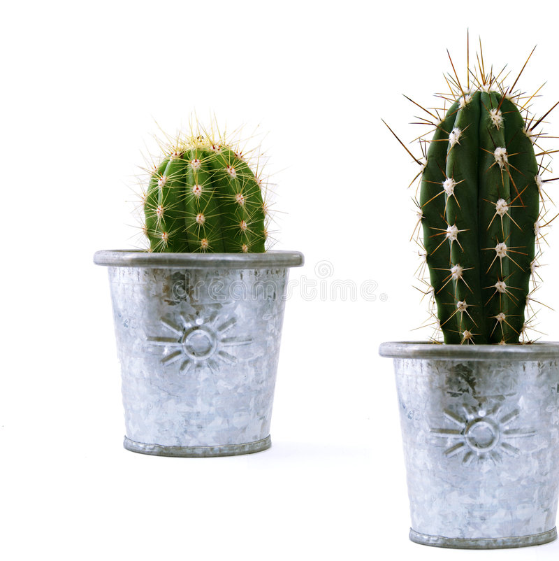 Cactuses02 Royalty Free Stock Image