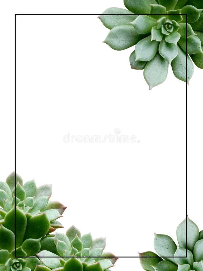 Cactusgrens op witte achtergrond stock foto