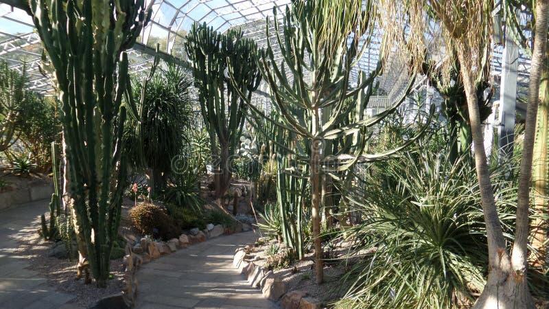 Cactushuis in zonnig Aberdeen royalty-vrije stock afbeelding