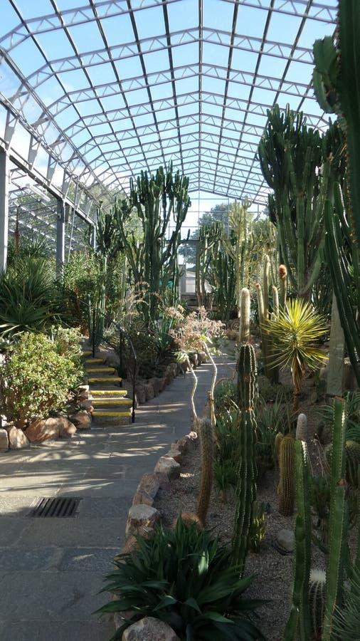 Cactushuis in zonnig Aberdeen stock afbeeldingen