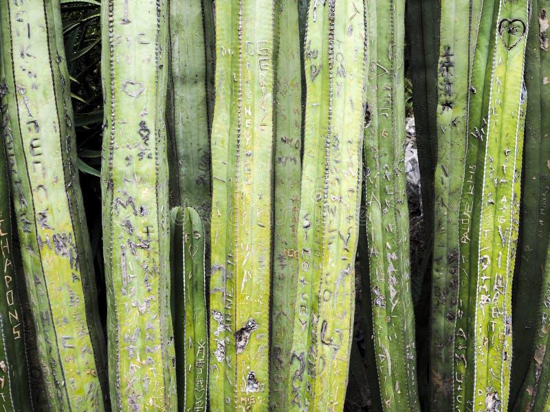 Cactusinschrijvingen stock foto's
