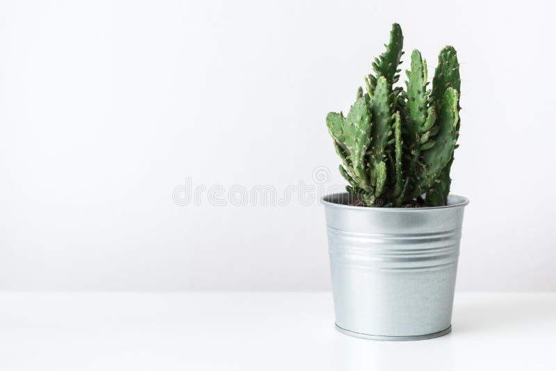 Cactusinstallatie in dichte omhooggaand van de metaalpot Moderne ruimtedecoratie De installatie van het cactushuis stock afbeelding