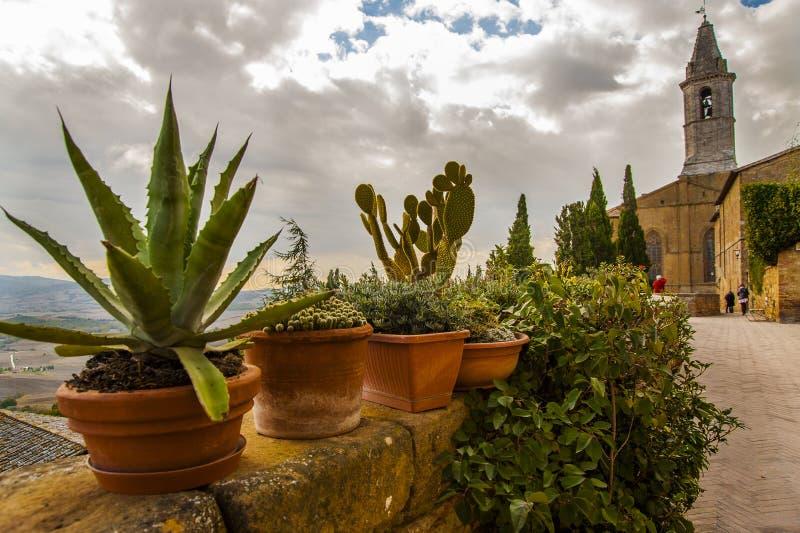 Cactusinstallaties en kleine struiken op een muur die het Toscaanse platteland overzien stock fotografie