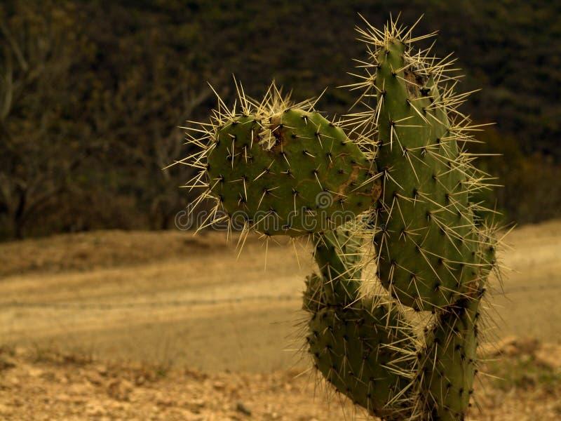 Cactusl En El Camino Foto de archivo