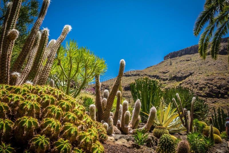 cactuspark stock fotografie