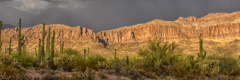 Cactuspark vóór regen stock fotografie