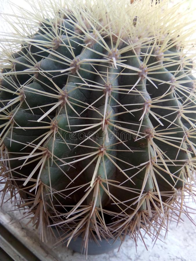 Cactusplaneet royalty-vrije stock afbeeldingen