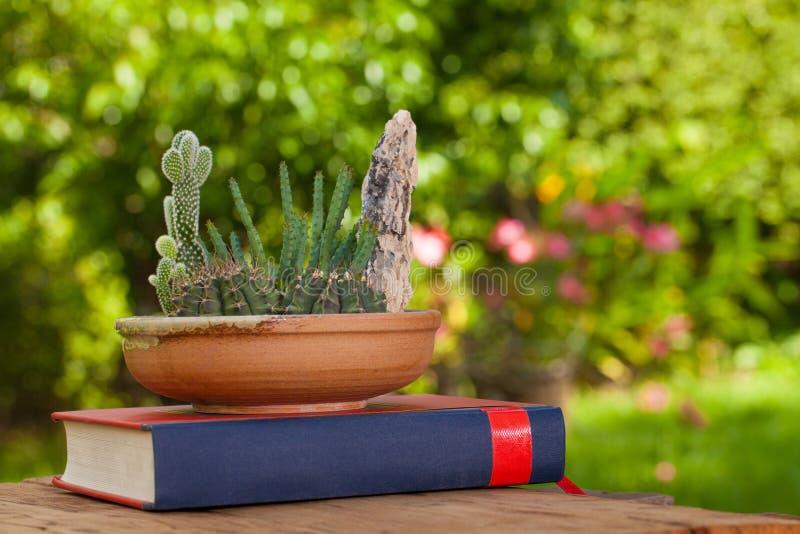 Cactuspot en een groot boek stock foto