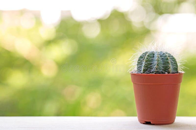 Cactuspotten stock fotografie