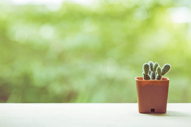 Cactuspotten royalty-vrije stock fotografie