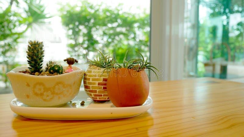 Cactuspotten op de lijst bij de koffiewinkel royalty-vrije stock afbeelding