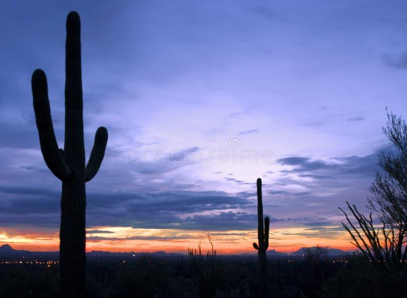 Cactussen bij zonsondergang in het Nationale Park van Saguaro, Tucson, Californië royalty-vrije stock foto's
