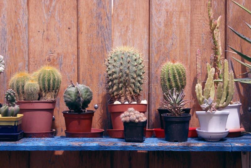 Cactussen op een Plank in de Tuin stock afbeeldingen