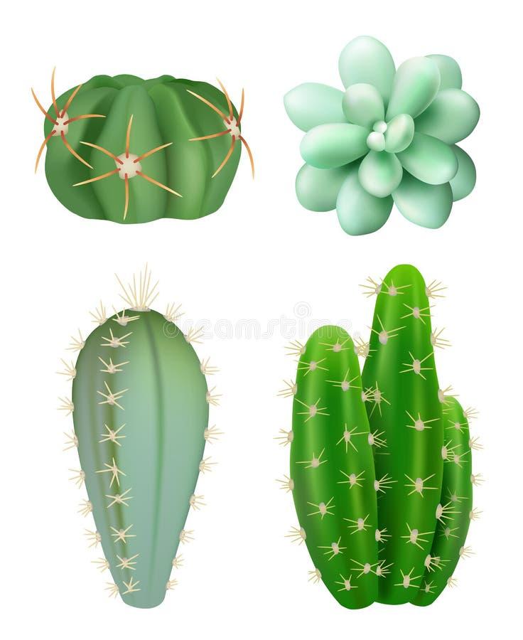 Cactusseninstallaties De decoratieve realistische succulente groene binnen botanische groeiende vectorbeelden van installaties ve stock illustratie