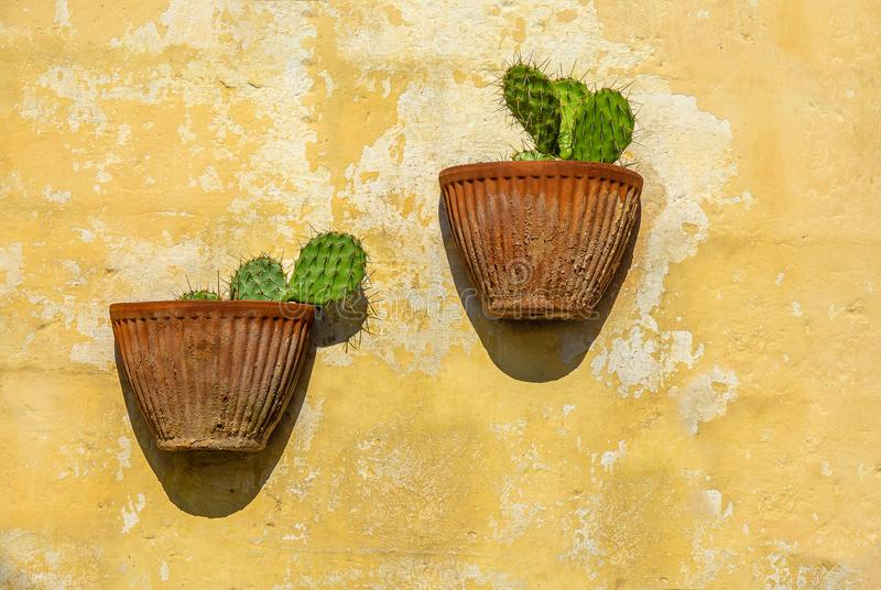 Cactusses en potes de arcilla imagen de archivo