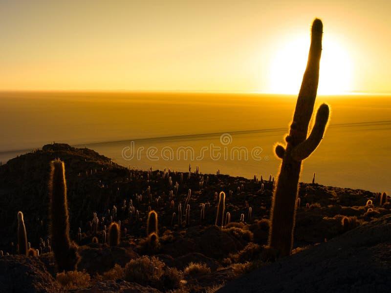 Cactussilhouet in zonsopgang op Salar de Uyuni royalty-vrije stock afbeelding