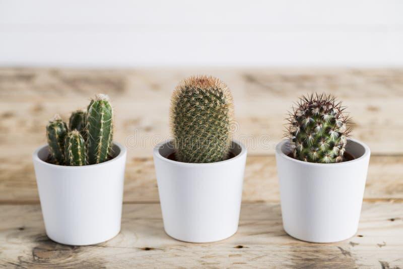 Cactustrio stock afbeeldingen