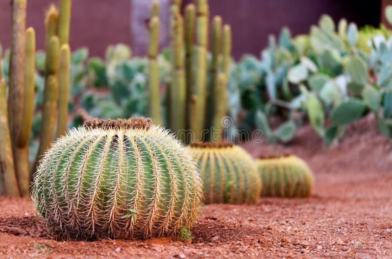 Cactustuin stock afbeeldingen