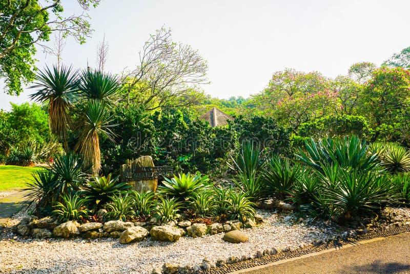 Cactustuin met kleine weg en rotssteen ter plaatse in bogor Indonesië - foto stock foto's