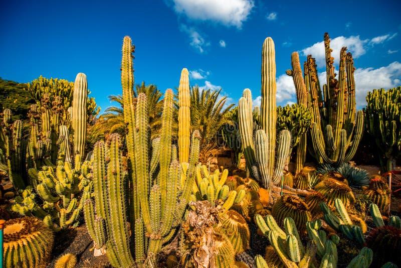 Cactustuin op het eiland van Gran Canaria stock afbeeldingen