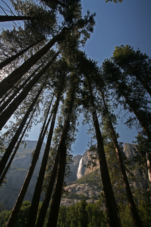 cade gli alberi yosemite fotografia stock