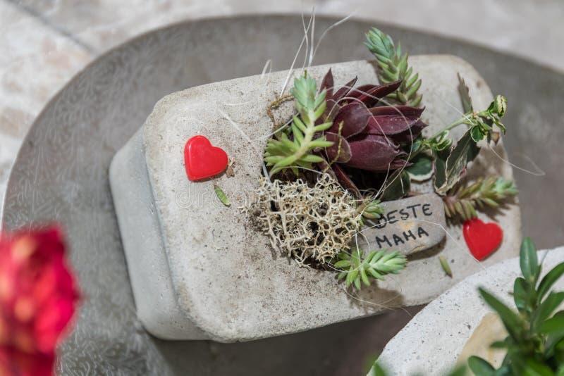 Cadeau aimant de jour de mères - succulents décoratifs photo libre de droits