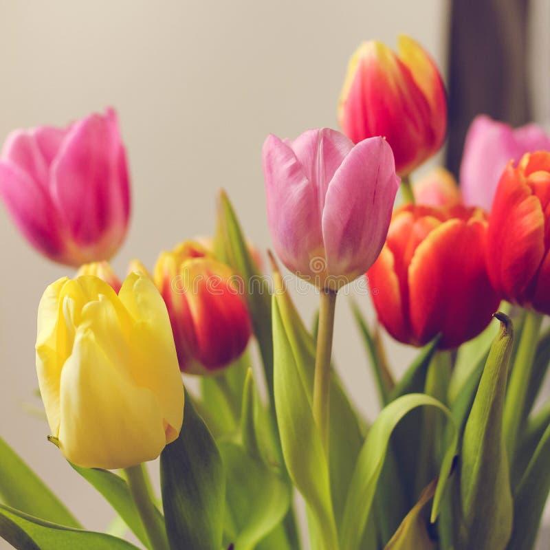 Cadeau le 8 mars photographie stock