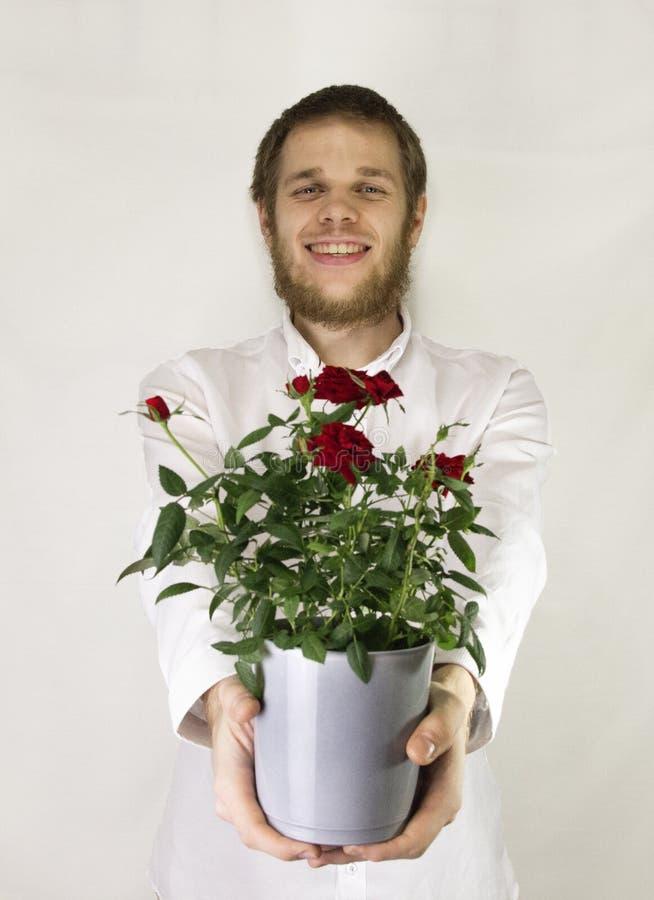 cadeau pour des vacances - pot de fleur avec les roses jaunes image libre de droits