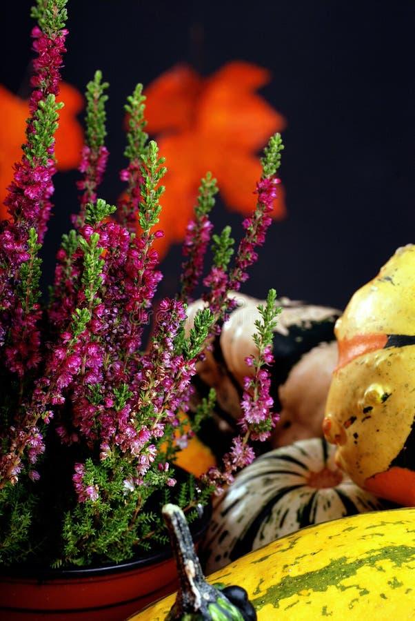 Cadeaux d'automne. photos stock