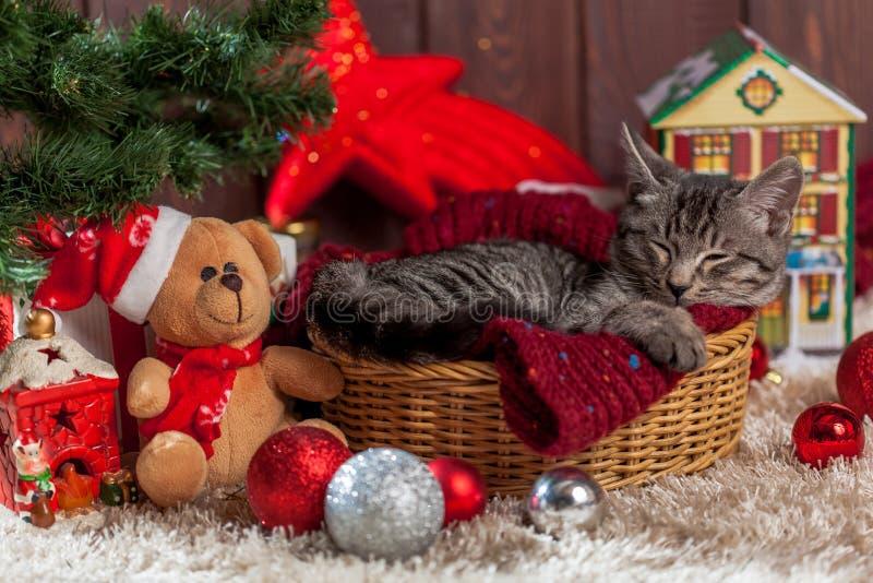 Cadeaux et chaton de Noël sous l'arbre photo stock