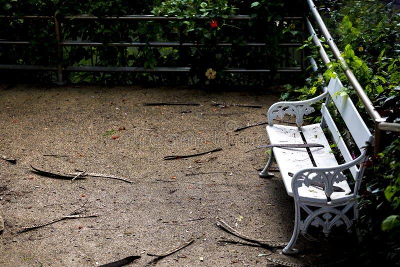 Cadeira branca vazia no parque foto de stock royalty free