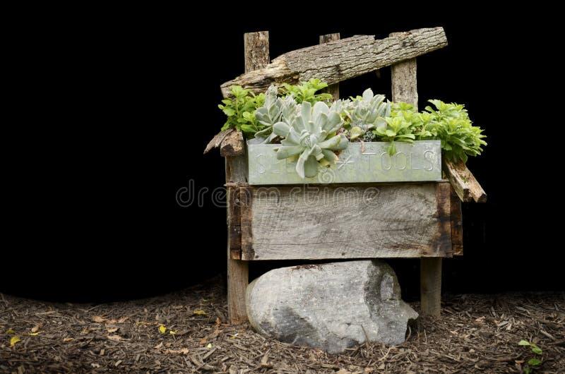 Cadeira de madeira com plantas fotos de stock royalty free