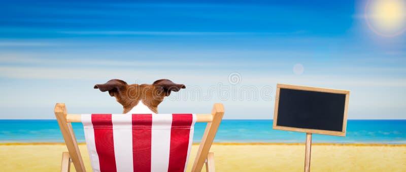 Cadeira de praia do cão no verão imagem de stock royalty free