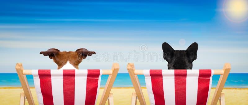 Cadeira de praia do cão no verão fotografia de stock royalty free