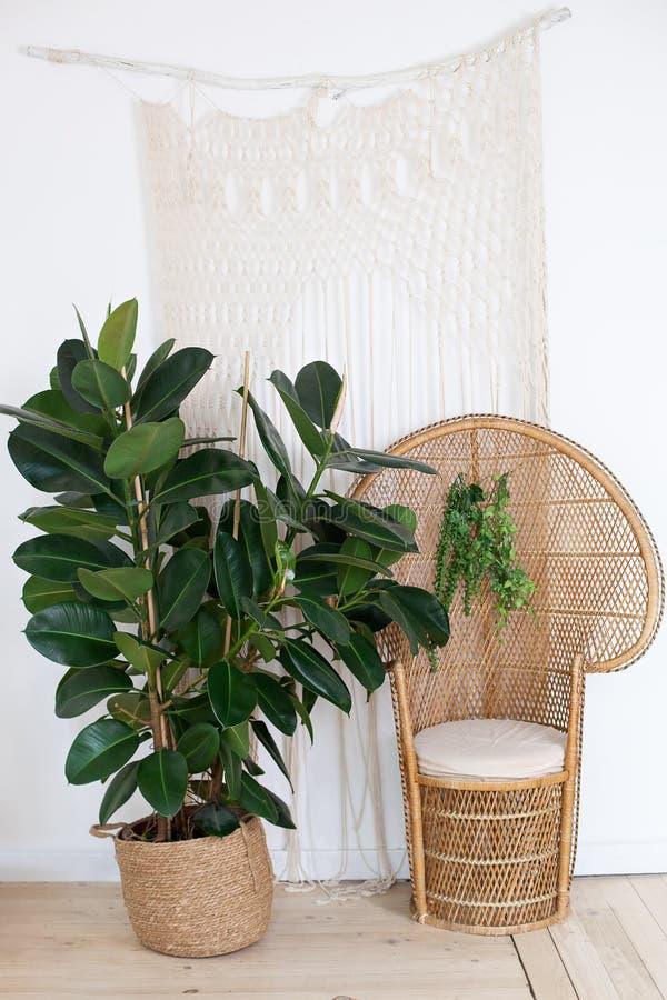 Cadeira de punho de guincho mais vadio na sala de estar com decorações boêmicas e um grande ficus numa vara de palha Decoração in fotos de stock royalty free