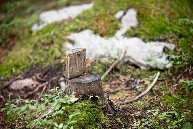 Cadeira pequena do coto de árvore fotos de stock