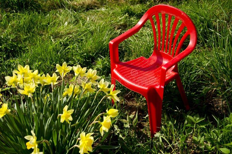Cadeira vermelha das crianças no narciso do jardim e da mola foto de stock royalty free