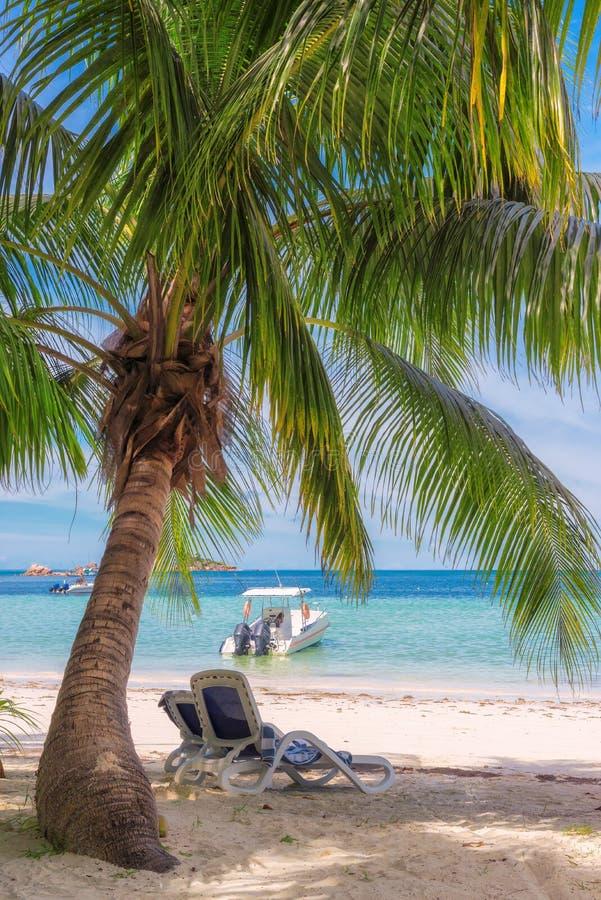 Cadeiras de praia sob uma palmeira na praia tropical imagens de stock