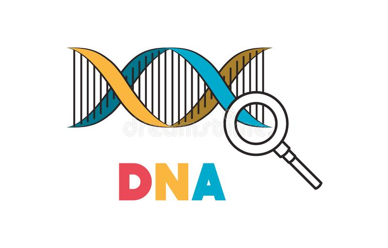 Cadena de la DNA con la lupa stock de ilustración