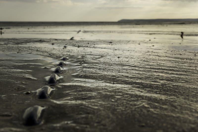 Cadena integrada en arena mojada en la playa durante la bajamar fotografía de archivo
